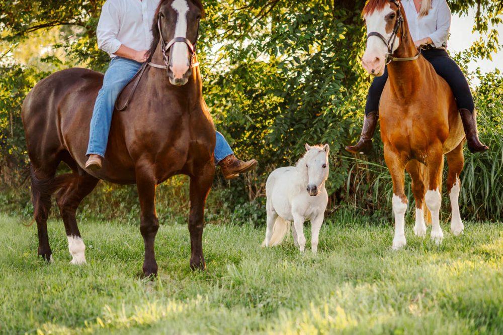 kentucky horse park pregnancy announcement