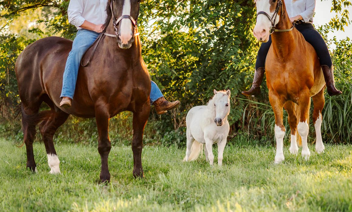 kentucky horse park pregnancy announcement