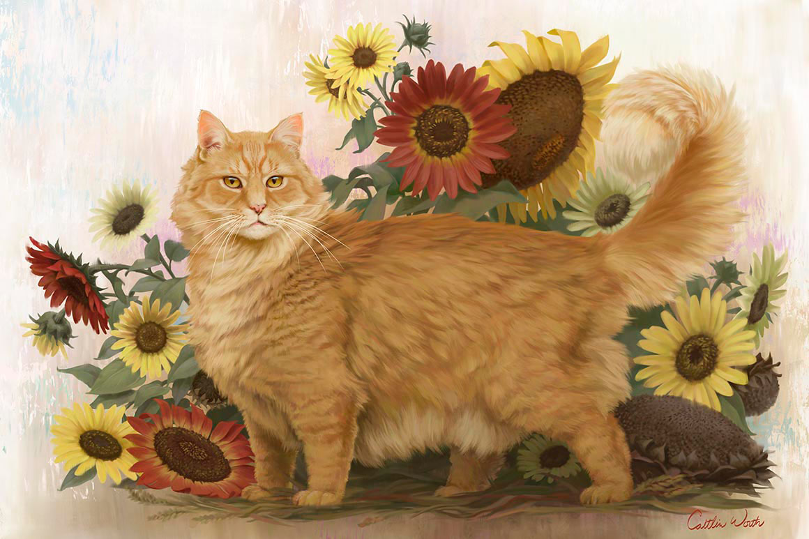 fluffy orange cat with sunflowers